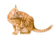 Juckreiz bei Katzen (Foto: Fotolia)