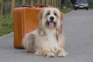 Reisekrankheit bei Hunden ( Foto obs/Bundesverband für Tiergesundheit e.V./Andrea Klostermann)