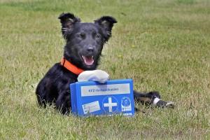 Erste Hilfe für Hunde (Foto © obs/Bundesverband für Tiergesundheit e.V./Andrea Klostermann)