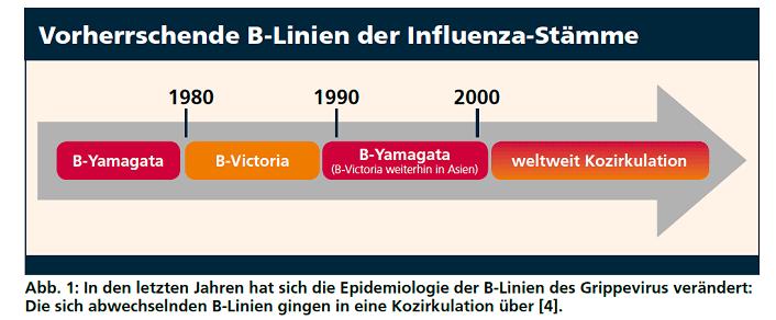 Vorherrschende B-Linien der Influenza-Stämme (Foto © GSK)