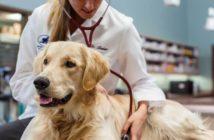 Tierarzt behandelt einen Hund (Foto: Zoetis)