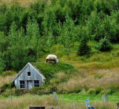 Island: Im Land der Geysire, Trolle und Vulkane