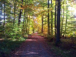 Waldweg im Herbst (Foto: ©DHU, Carina Lenfers)
