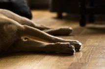 Zooanthroponose: Krankheiten werden vom Hund auf den Menschen übertragen
