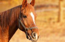 Borreliose beim Pferd - das müssen Sie wissen