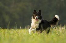 Läufigkeit beim Hund - so können Sie damit umgehen!
