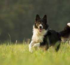 Läufigkeit beim Hund – so können Sie damit umgehen!