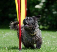 Agility-Taining für Hunde – Alle Vorteile auf einen Blick