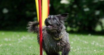 Agility-Taining für Hunde