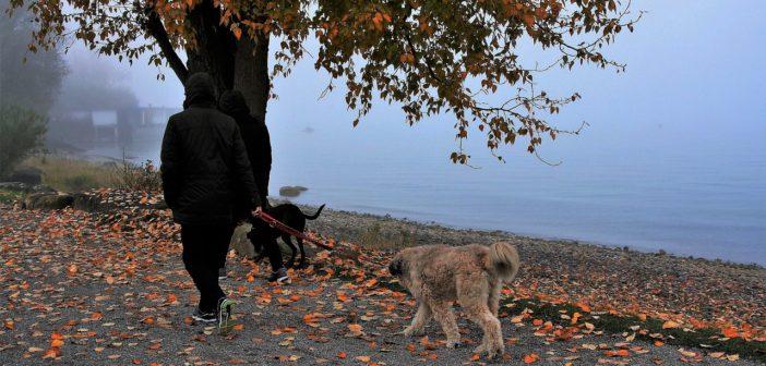 Hundegesetze in Deutschland - Das sollten Sie wissen