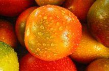 Obst und Gemüse - Was darf in den Kühlschrank?