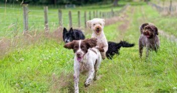 Flöhe bei Hund und Katze sicher und effektiv bekämpfen