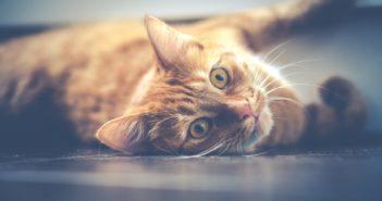 Was kostet eine Katze im Monat?