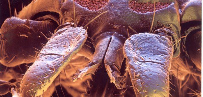 Bild einer Zecke