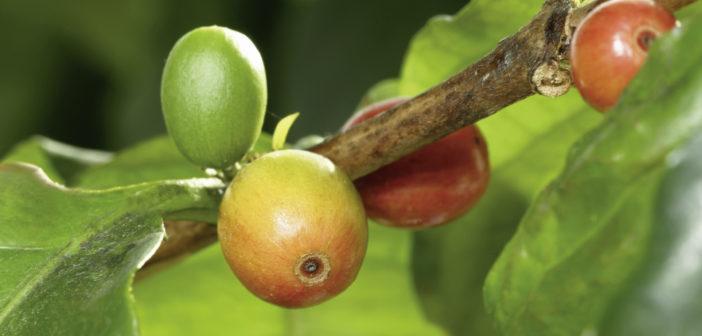 Darmerkrankungen pflanzlich behandeln