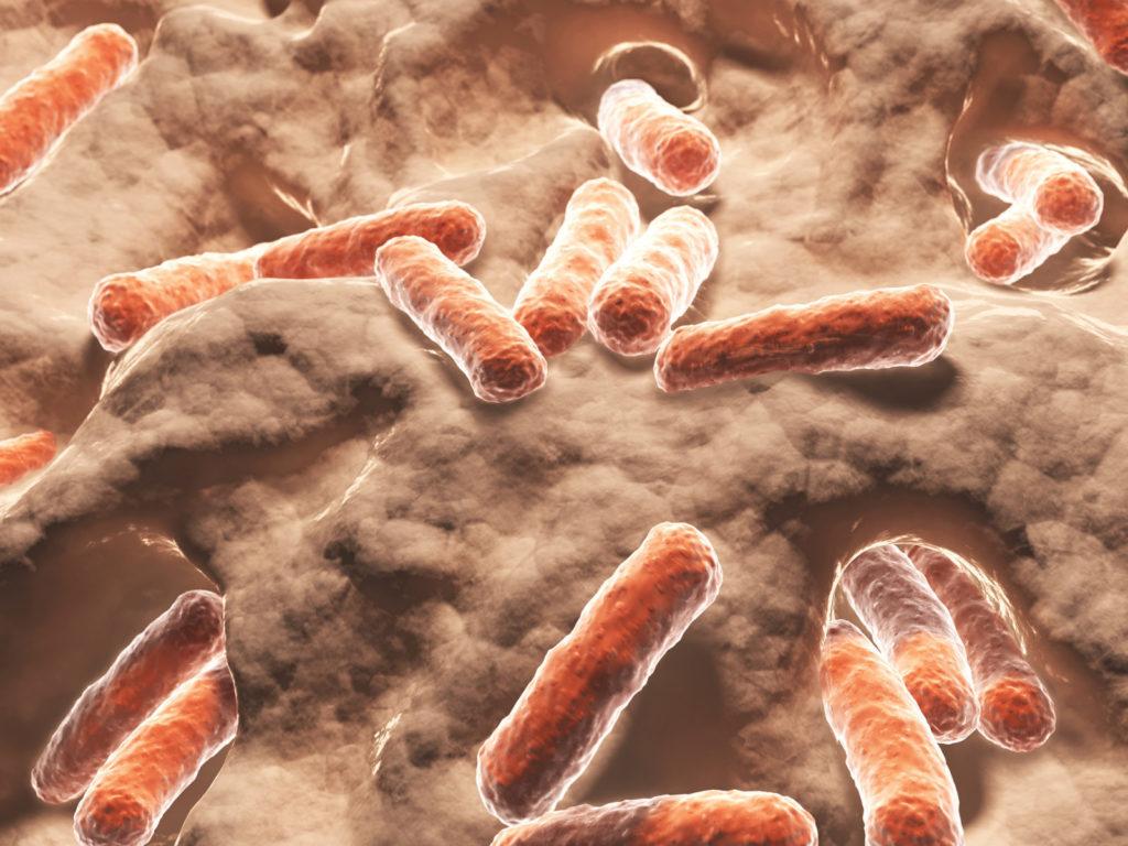 Bild von Bakterien & Bazillen bei Darmproblemen