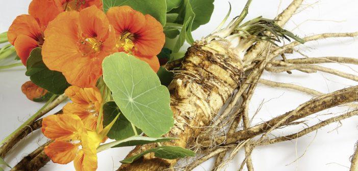 Pflanzliche Senföle gegen Blasenentzündungen