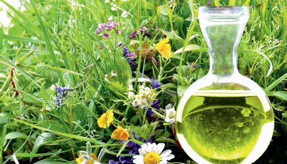 Ampulle mit pflanzlichen Arzneimitteln gegen Darmbeschwerden